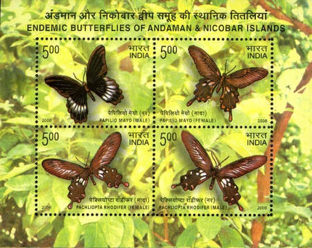 [Endemic Butterflies of Andaman and Nicobar Islands, Typ ]