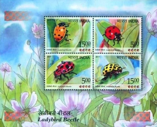 [Ladybird Beetle, Typ ]