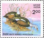 [Wildlife Conservation. White-winged Wood Duck, Typ AFK]
