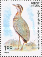 [Wildlife Conservation. Jerdon's Courser, Typ ALQ]