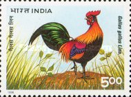 [The 20th World Poultry Congress, New Delhi, Typ AYJ]