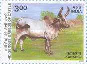 [Indigenous Breeds of Cattle, type BHQ]