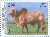 [Indigenous Breeds of Cattle, Typ BHS]