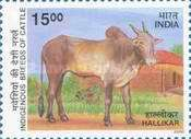 [Indigenous Breeds of Cattle, type BHT]