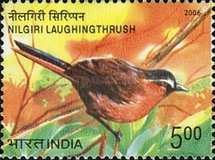 [Endangered Birds of India, type CKH]