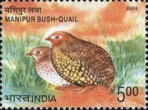 [Endangered Birds of India, type CKI]