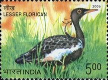 [Endangered Birds of India, type CKJ]