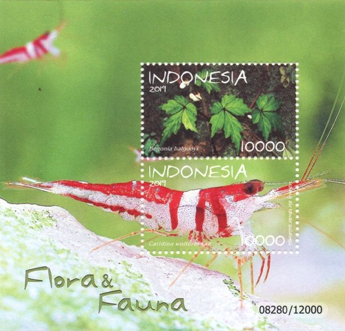 [Flora & Fauna of Indonesia, type ]