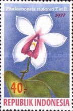 [Orchids, Typ AHK]