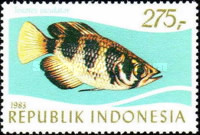 [Tropical Fish, Typ AQK]