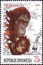 [Endangered Animals - The Orangutan, Typ AXB]