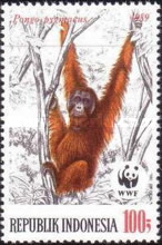 [Endangered Animals - The Orangutan, Typ AXC]