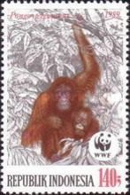 [Endangered Animals - The Orangutan, Typ AXD]