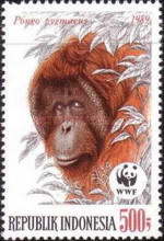 [Endangered Animals - The Orangutan, Typ AXE]