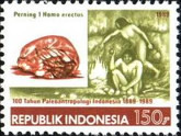 [The 100th Anniversary of Palaeoanthropology in Indonesia, Typ AXR]