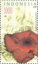 [Flora and Fauna, type CGB]