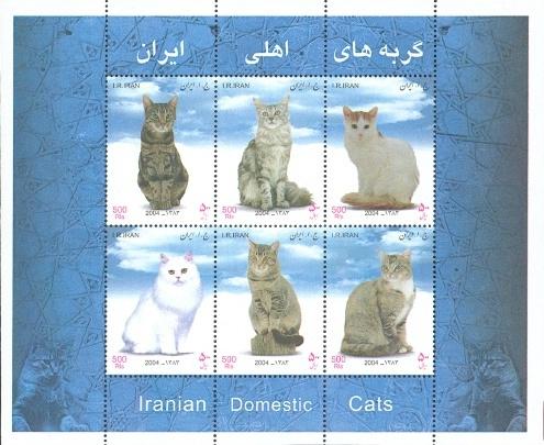 [Iranian Domestic Cats, Typ ]