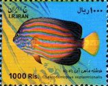 [Fish of the Persian Gulf, Typ DYS]