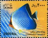 [Fish of the Persian Gulf, Typ DYT]