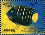 [Fish of the Persian Gulf, Typ DYV]