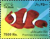 [Fish of the Persian Gulf, Typ DYY]