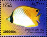 [Fish of the Persian Gulf, Typ XYT]