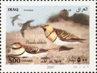 [Birds of Iraq, Typ AFT]