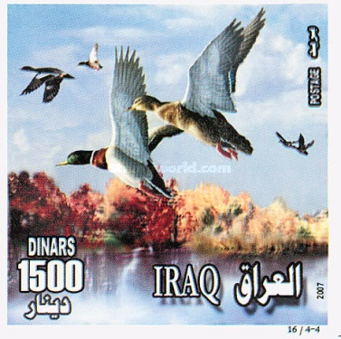 [Birds of Iraq, Typ AFU]