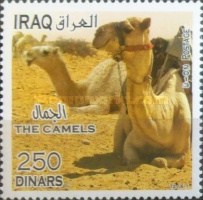 [Camels, Typ ANE]