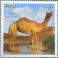 [Camels, Typ ANF]