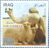 [Camels, Typ ANH]