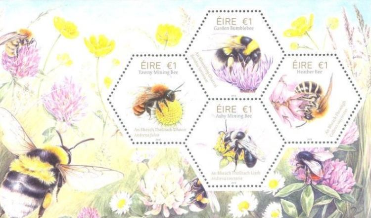 [Fauna and Flora – Native Irish Bees, type ]