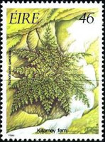 [Irish Flora - Ferns, Typ MA]