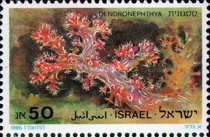 [Red Sea Corals, Typ AKP]