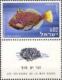 [Red Sea Fish, Typ JJ]