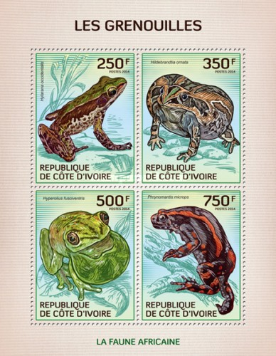 [African Fauna - Frogs, Typ ]