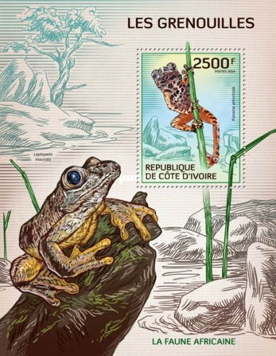 [African Fauna - Frogs, type ]