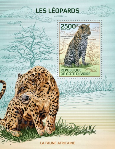 [African Fauna - Leopards, Typ ]