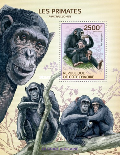 [African Fauna - Primates, Typ ]
