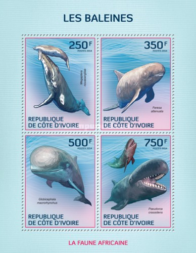 [African Fauna - Whales, Typ ]