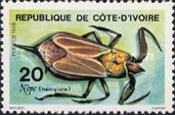 [Insects, type OD]