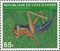 [Insects, Typ XPR]