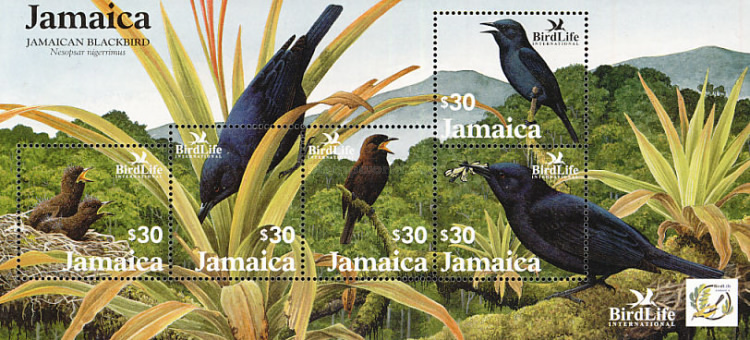 [Bird Life International - Jamaican Blackbird, type ]