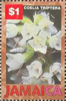 [Orchids, type AFL]
