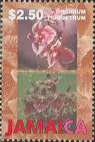 [Orchids, type AFN]