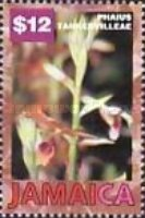 [Orchids, type AFS]