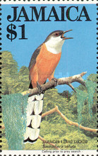 [Lizard Cuckoo, type TN]