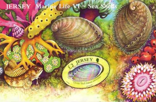 [Marine Life - Sea Shells, Typ ]
