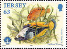 [International Year of the Ocean - Fish, Typ AEP]