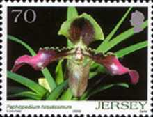 [Orchids, Typ APR]